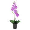 EUROPALMS Orchid, purple, 57cm