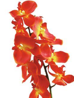 EUROPALMS Orchid spray, orange, 70cm