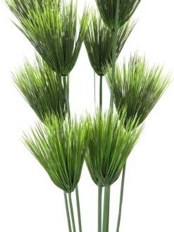 EUROPALMS Papyrus plant, 150cm