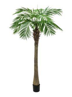 EUROPALMS Phoenix palm tree luxor, 240cm