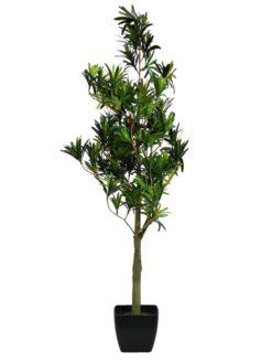 EUROPALMS Podocarpus tree, 90cm