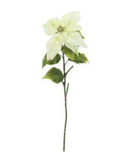 EUROPALMS Poinsettia, cream, 70cm