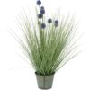 EUROPALMS Pompon Gras, 53cm, purple