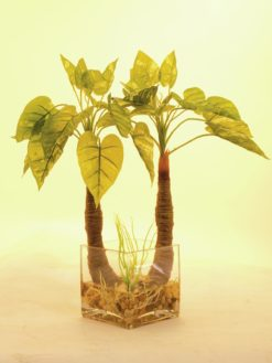 EUROPALMS Pothos in glass, 50cm