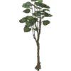 EUROPALMS Pothos tree, 175cm