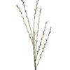 EUROPALMS Pussy willow spray, 117cm