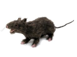 EUROPALMS Rat, lifelike with coat 30cm