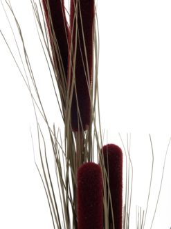 EUROPALMS Reed grass cattails, dark-brown, 152cm