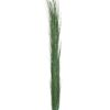 EUROPALMS Reed grass, dark green, 127cm