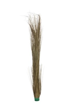 EUROPALMS Reed grass, khaki, 127cm