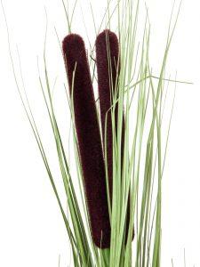 EUROPALMS Reed grass w/ cattails,light green,152cm