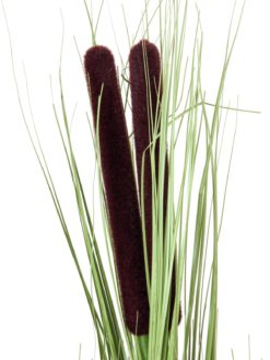 EUROPALMS Reed grass w/ cattails,light green,152cm