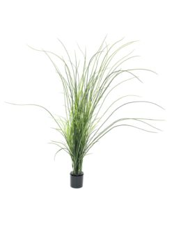 EUROPALMS Reed grass. 145cm
