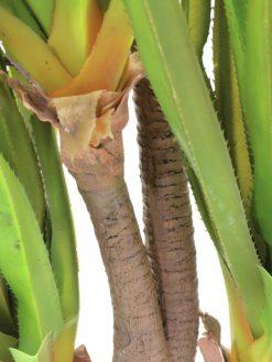 EUROPALMS Sabre-tooth century plant, 185cm