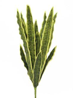 EUROPALMS Sansevieria (EVA), green-yellow, 50cm