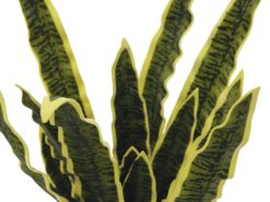 EUROPALMS Sansevieria (EVA), green-yellow, 74cm