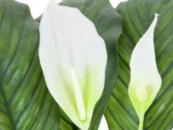 EUROPALMS Spathiphyllum deluxe, 83cm