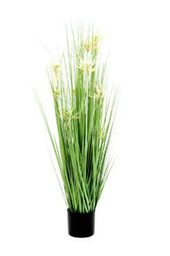 EUROPALMS Star grass, 105cm