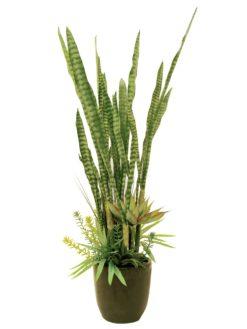 EUROPALMS Succulent-Mix, 190cm