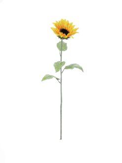 EUROPALMS Sunflower, 110cm