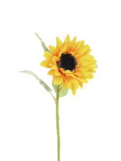 EUROPALMS Sunflower, 70cm