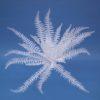 EUROPALMS White boston fern, 60cm