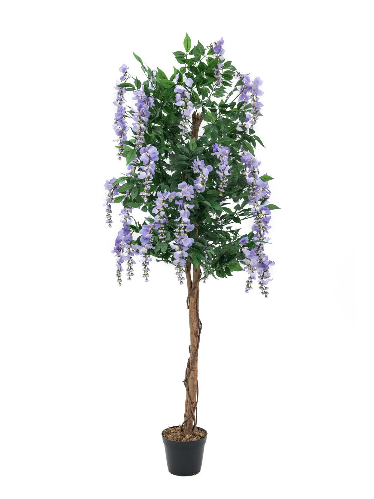 Europalms wisteria purple 240cm su for Bougainvillea bonsai prezzo