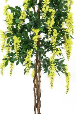 EUROPALMS Wisteria, yellow, 180cm