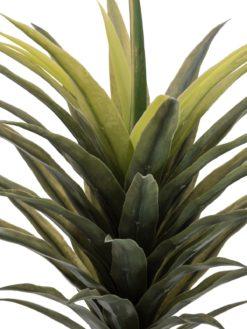 EUROPALMS Yucca palm, 165cm