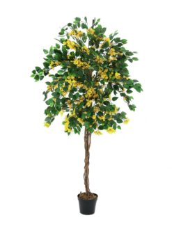 EUROPALMS Bougainvillea, yellow, 150cm