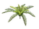 EUROPALMS Forest fern, 30cm