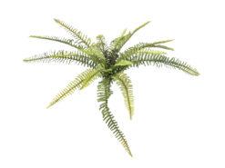 EUROPALMS Forest fern, 40cm