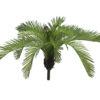 EUROPALMS Cycas Fern, 50 cm