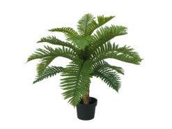 EUROPALMS Cycas Palm Tree, 70cm