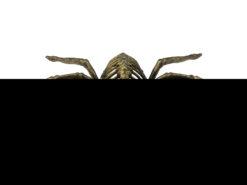 EUROPALMS Halloween Spider, gold