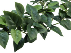 EUROPALMS Philodendron Garland Classic, 180cm