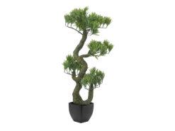 EUROPALMS Pine Bonsai, 70cm