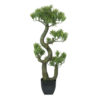 EUROPALMS Pine Bonsai, 70cm