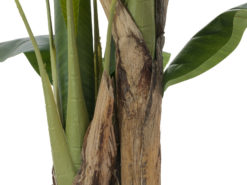 EUROPALMS Banana tree, artificial plant, 120cm