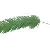 EUROPALMS Coconut Kingpalm branch, 180cm