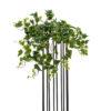 EUROPALMS Hollan Ivy Bush, Premium, 50cm