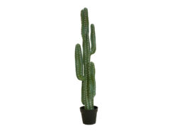 EUROPALMS Mexican cactus, artificial plant, green, 123cm