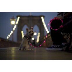 Guinzaglio di sicurezza con LED per animali domestici